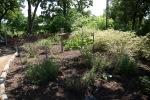 garden041516_65