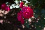 garden041516_73