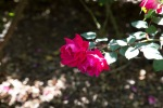 garden041516_74