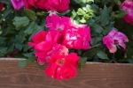 garden041516_9