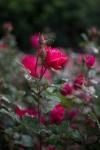 garden041816_1