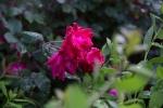 garden041816_2