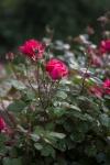 garden041816_3