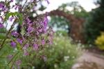 garden041816_39