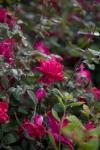 garden041816_4