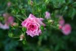 garden041816_52