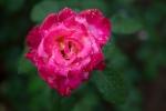 garden041816_59