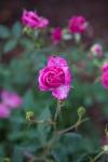 garden041816_63
