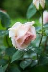 garden041816_66