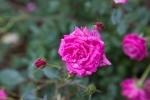 garden042016_15