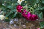 garden042016_23