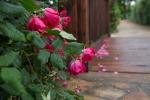 garden042016_26