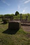 vineyard_6