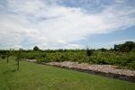 garden051616_1