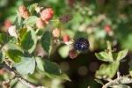 garden051616_14