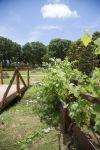 garden051616_28