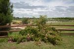 garden051616_31