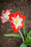 garden051616_37