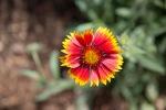 garden051616_40