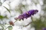 garden051616_52