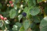 garden051616_9