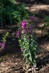 garden060616_10