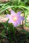 garden060616_11