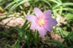garden060616_12