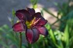 garden060616_15