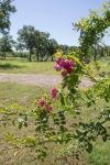 garden060616_16