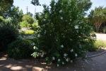 garden060616_31