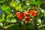 garden060616_35