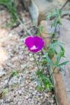 garden060616_6