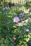 garden060616_8