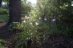 garden070816_13