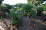 garden070816_2