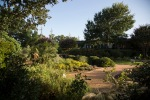 garden070816_24