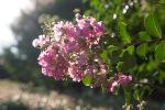 garden070816_5