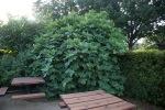 garden070816_8