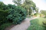 garden070816_9