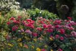 garden092316_14