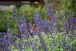monarchs_21