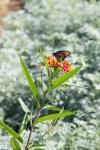 garden111816_1