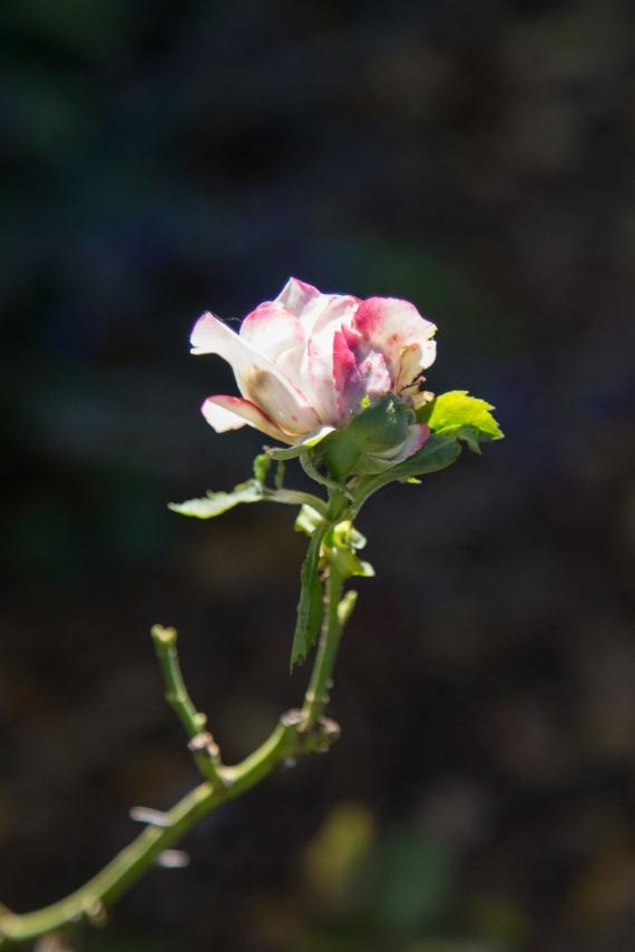 garden111816_28