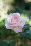 garden111816_32
