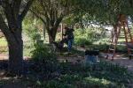 garden111816_6